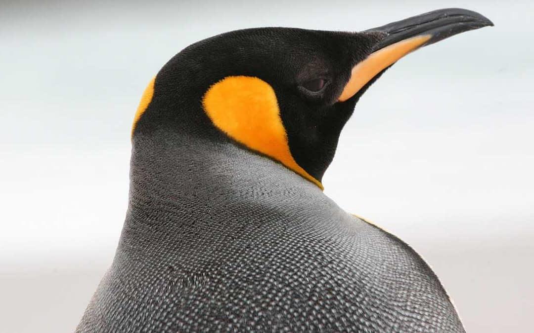 Penguin 4.0… and What it Means for Your SEO [Infographic]