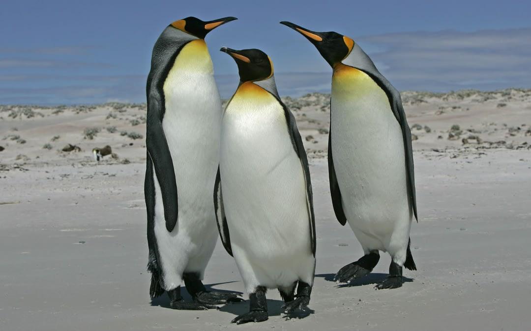 Penguin 3.0: did Google's website-eating penguins get you?