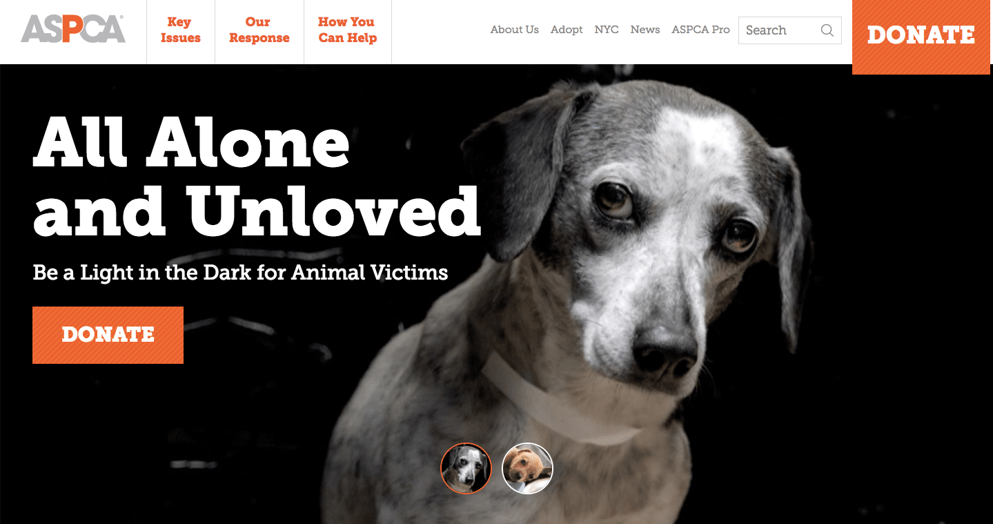 ASPCA Sadness wordpress image compression tips